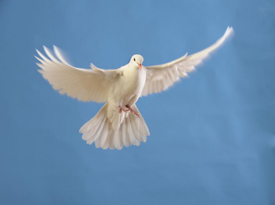 Pentecost Night Service